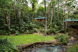 Exteriors - Narrows Escape Rainforest Retreat - Montville, Queensland, AUSTRALIA