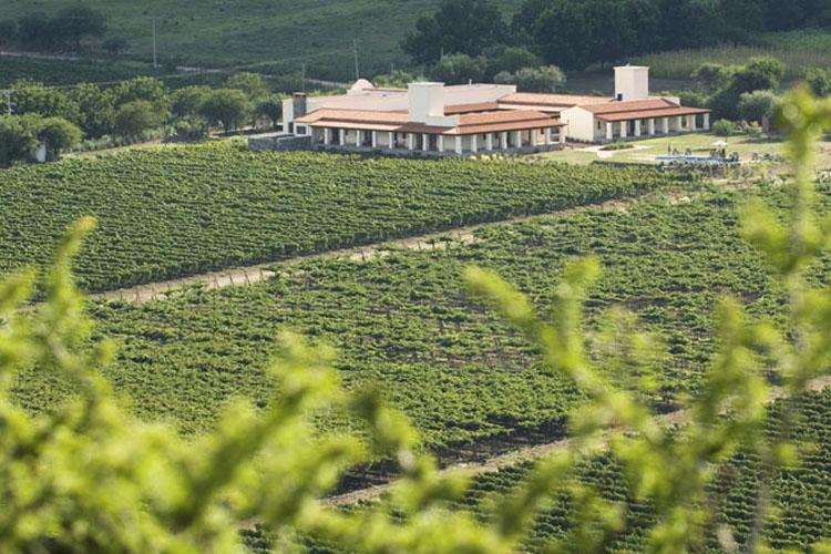 Exterior - Viñas de Cafayate Wine Resort - Cafayate