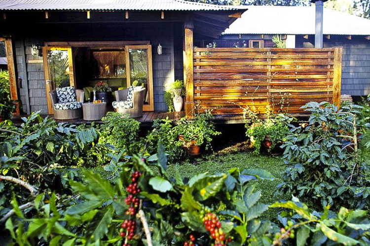 Exterior Common Area - Arusha Coffee Lodge - Arusha
