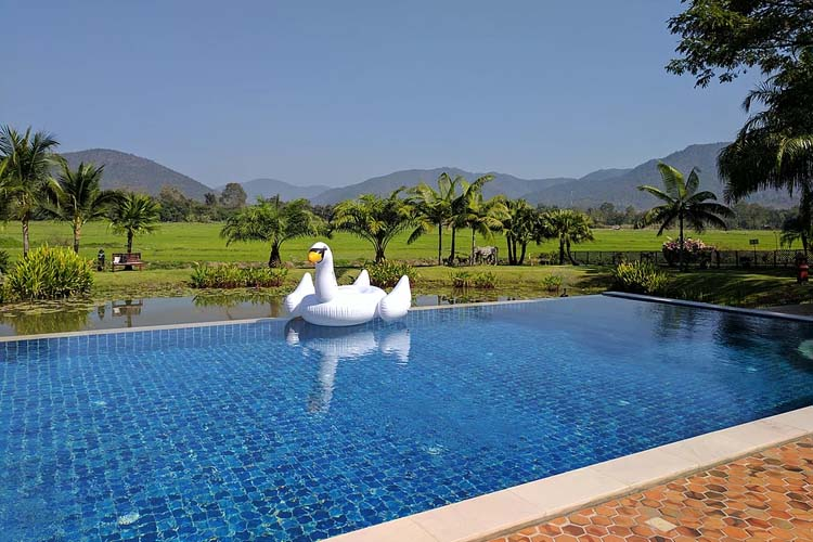 Swan on Pool - Rice and Zen Boutique Resort - Doi Saket
