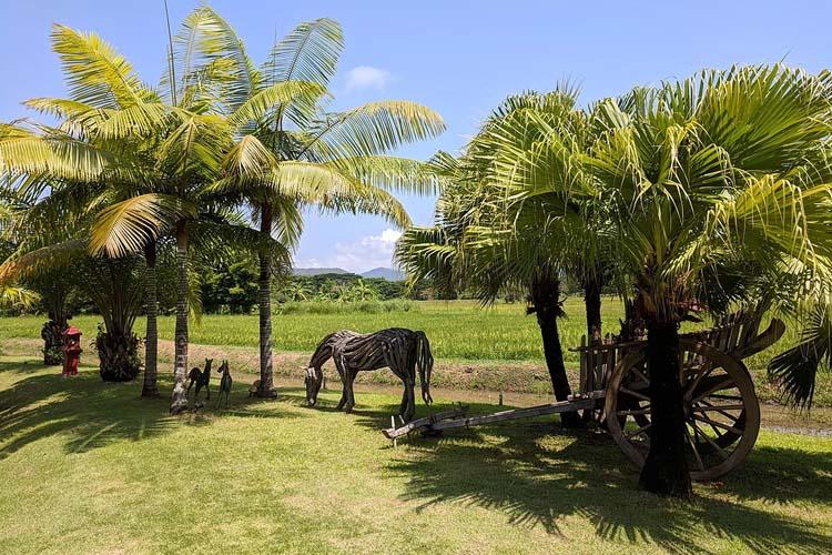A horse feeds - Rice and Zen Boutique Resort - Doi Saket