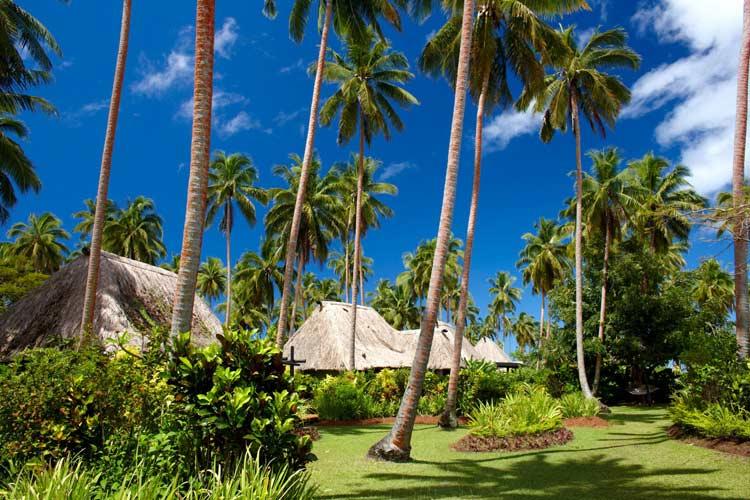 Palm Trees - J-M Cousteau Fiji Islands Resort - FIJI