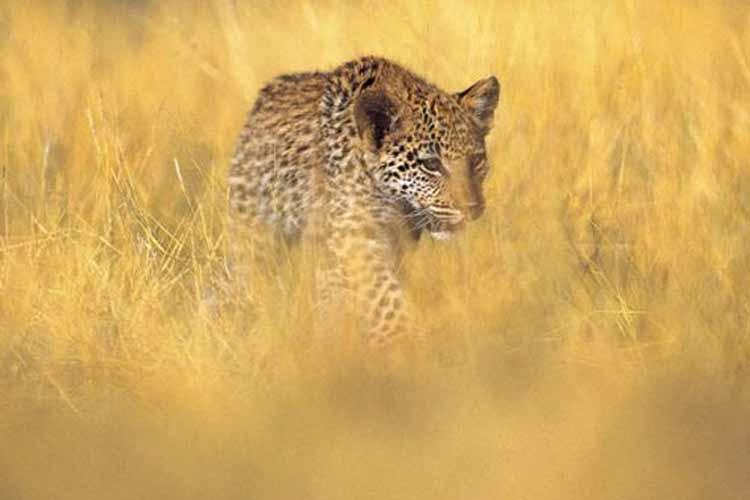 Animals - Honey Guide Camp - Kruger National Park