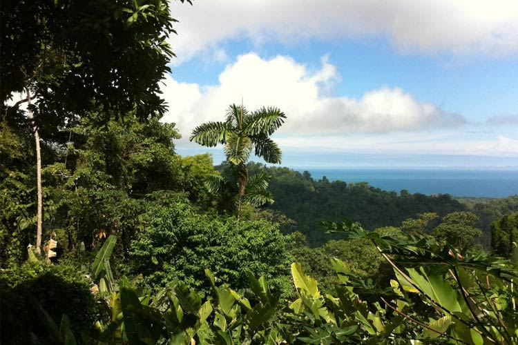 Views - Samasati - Puerto Viejo de Talamanca