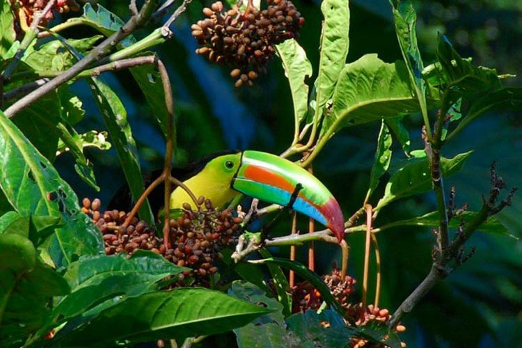 Animals - Samasati - Puerto Viejo de Talamanca