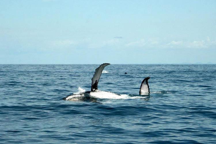 Whales - Hotel Maitei - Arraial d'Ajuda