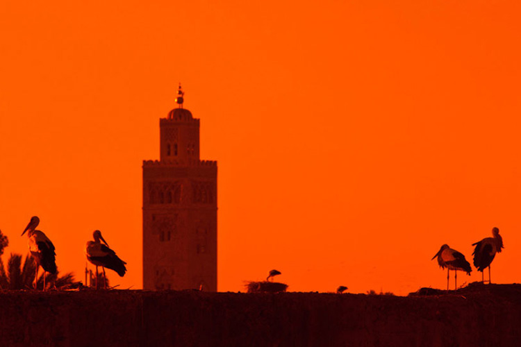 Sunset View - Dar Les Cigognes - Marrakech
