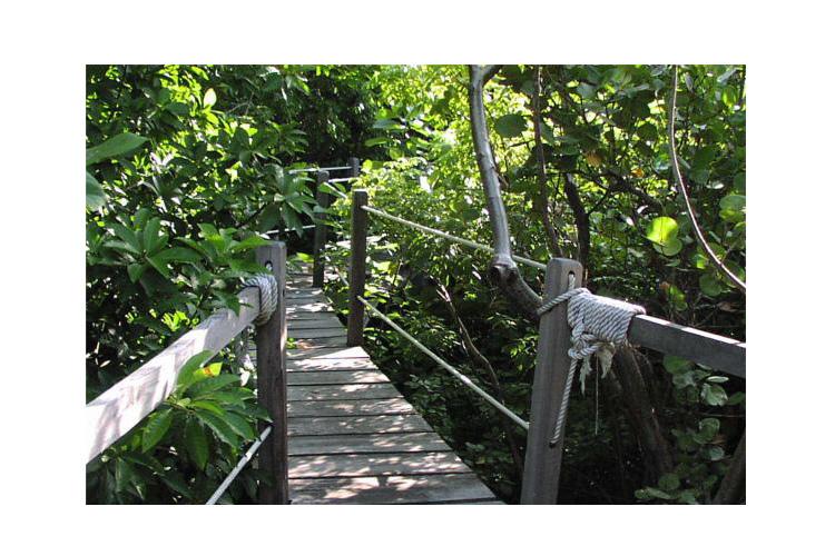 Details of the Garden - Xanadu Island Resort Belize - San Pedro