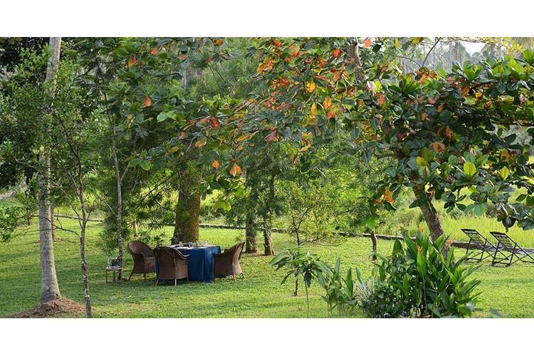 Garden - Maya - Aranwella
